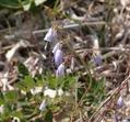 広島 深入山で見た花 3 花の名前を教えて下さい