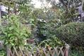 10月の庭から…その2
