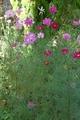 咲いてる花を集めてみました