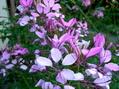 庭の草花と秋桜畑