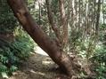 水苔採取とコスモス