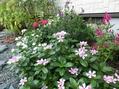 秋のミニ花壇