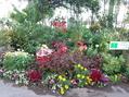 園芸教室をやってきました。