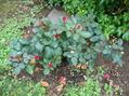 素早く庭仕事
