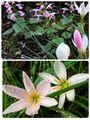 庭のお花達💗