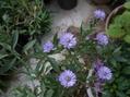 秋に咲く花は・・・