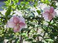 こっとの庭 2