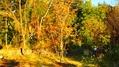山の庭 秋のヨハン・シュトラウスとリース