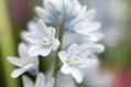 【植物図鑑】アルメリアなど6種類の植物情報追加