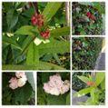 散歩道で見かけた植物!