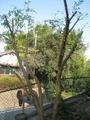庭木について、その後