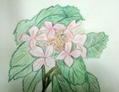 色鉛筆画です。