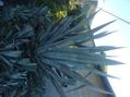ウォーキングのススメ!10巨大植物編[i:159]
