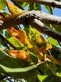 総集編 柿の木。その4