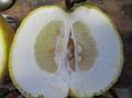 鬼柚子パパレード製造中1