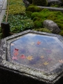 京の粋な秋(^^♪