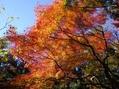等々力不動と渓谷の紅葉2