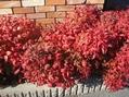 まだ紅葉綺麗です!