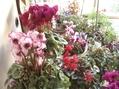 冬仕度②仏間は花壇に