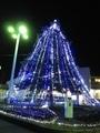 テリミトラの葉とクリスマスイルミネーション