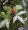 初雪です。