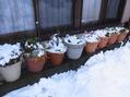 雪の中から~掘り出して移動!