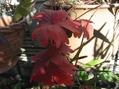 まだ紅葉を楽しんでいます