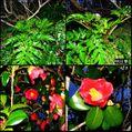 河津桜も葉桜に。ウォーキングMS⑨27日目(2947目)