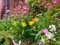 3月に咲く庭の花たち。