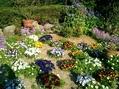 さくらの園芸