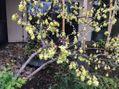 春を知らせる花木