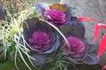 松竹梅の箱庭を彩る
