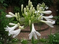 白花はさわやかです!