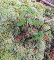 3月の山小屋 自然の盆栽?