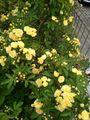 ☆ご近所散歩の植物さん〜№4・4月☆彡