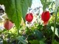 春[i:237]の足音[i:92][i:158]