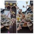 散歩道で見かけた植物