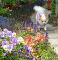 今日の庭から~🌿アジュガの小道🌿