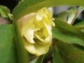 交配三番目の花。