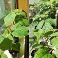種蒔き野菜苗とパッション