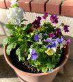 我が家のお花達♪ 寄せ植え編 その6