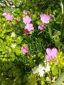 リトルチュチュ花壇です😄
