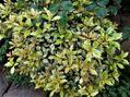 葉物が綺麗な時期になりました。🍀
