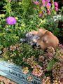 庭の生き物🐱