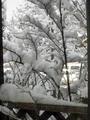 久し振りの大雪