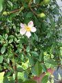5月上旬小さな庭