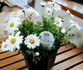 🐷 お花と一緒🐷マーガレット
