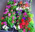 花売り場の光景