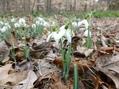 春一番?古い種の発芽率チェック
