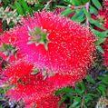 散歩道の花~金宝樹